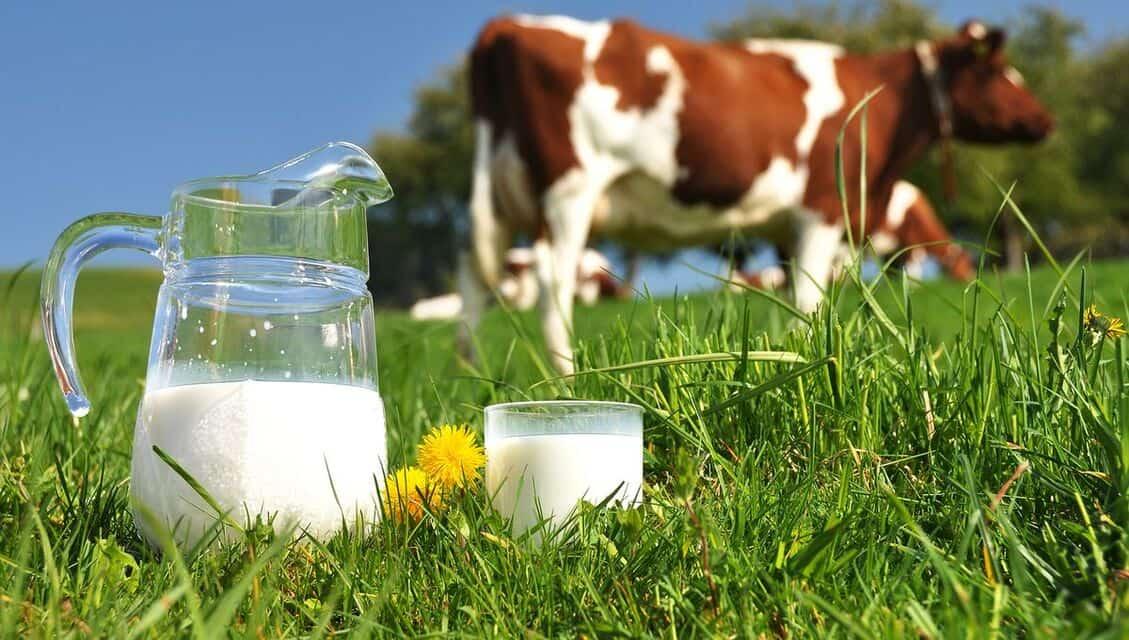 Ce que vous devez connaître sur le lait de vache